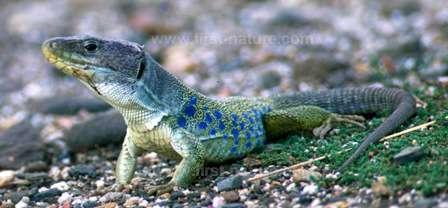 the fabulous reptiles ...
